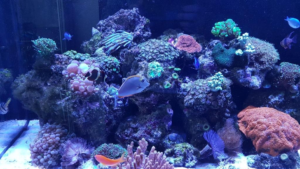 Marine Tank Fish Live Rock Corals