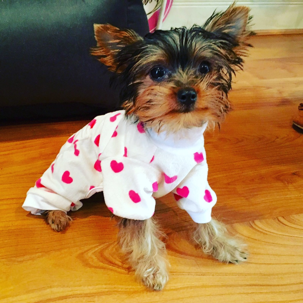 Pyjamas for XS doggie