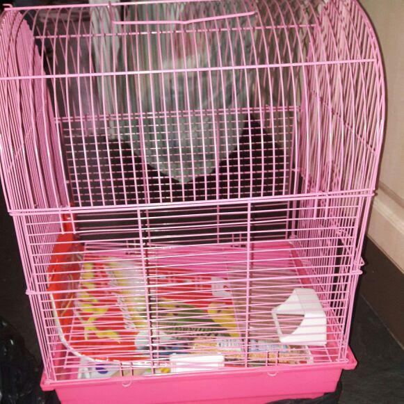Pink starter bird cage