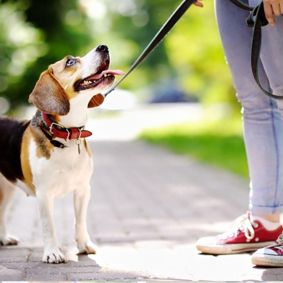 Dog walker / sitter