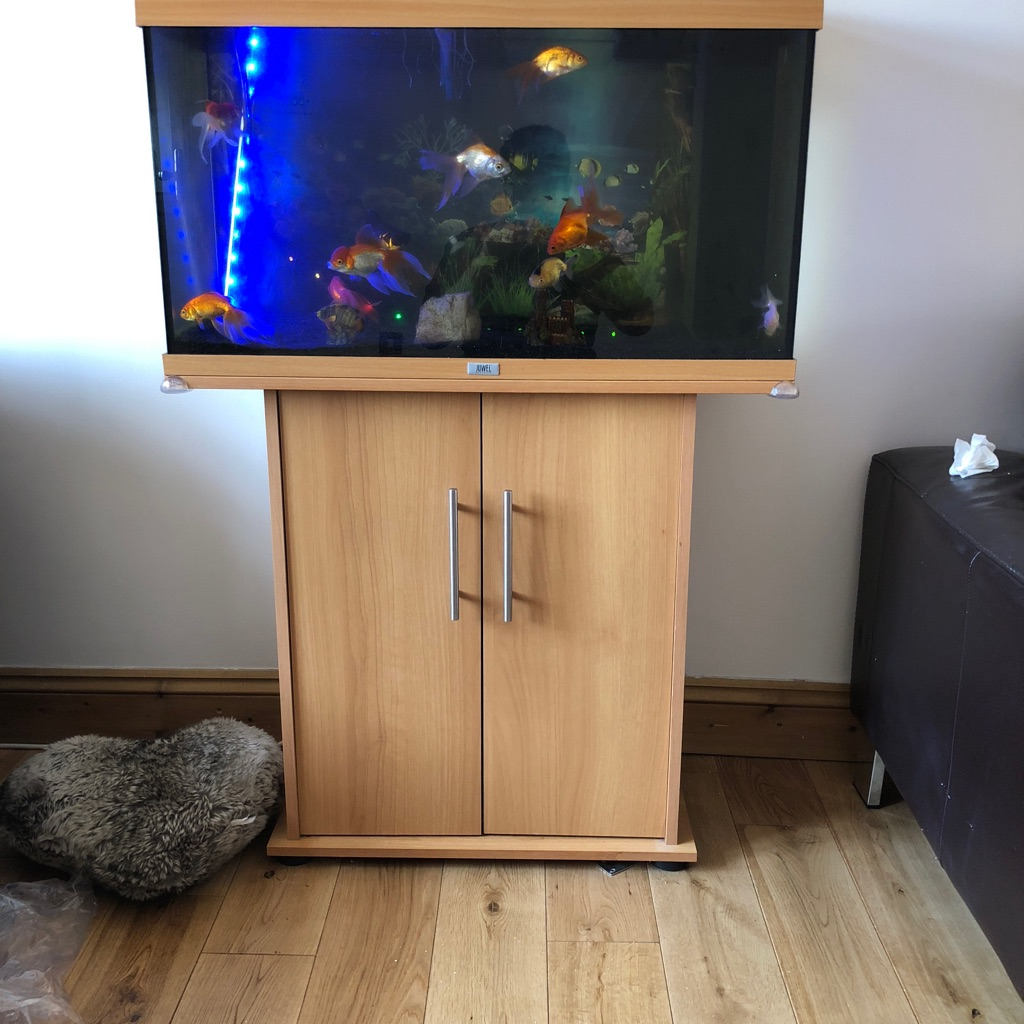 Fish tank with 9 goldfish
