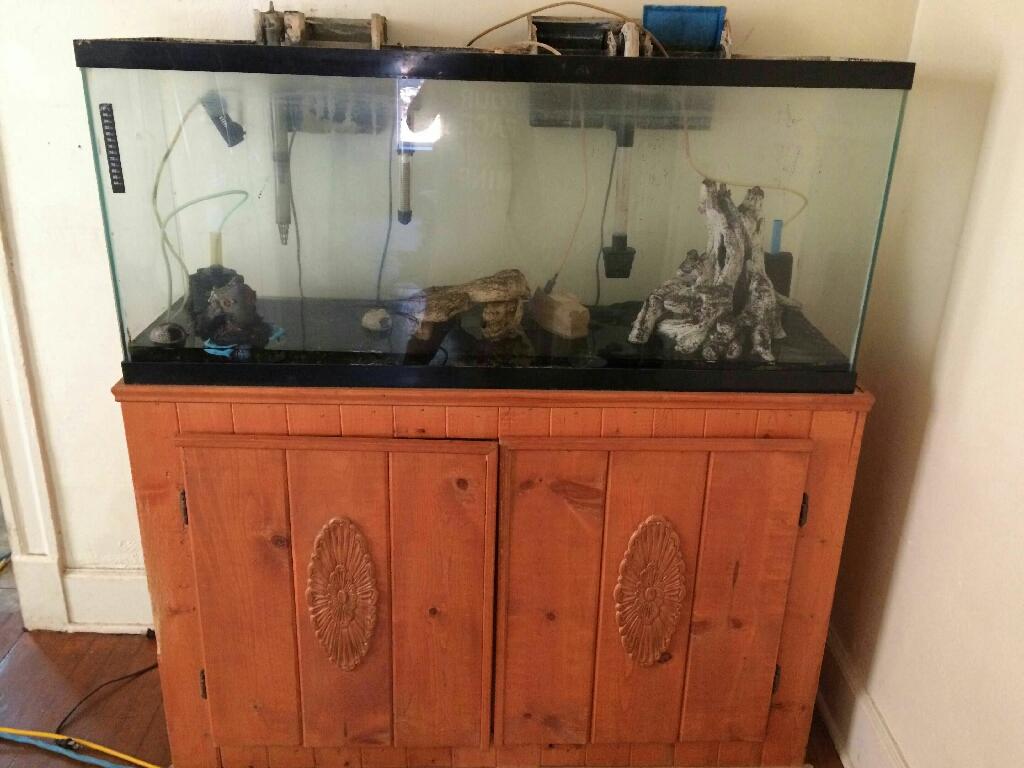 55 gallon fidh tank complete setup