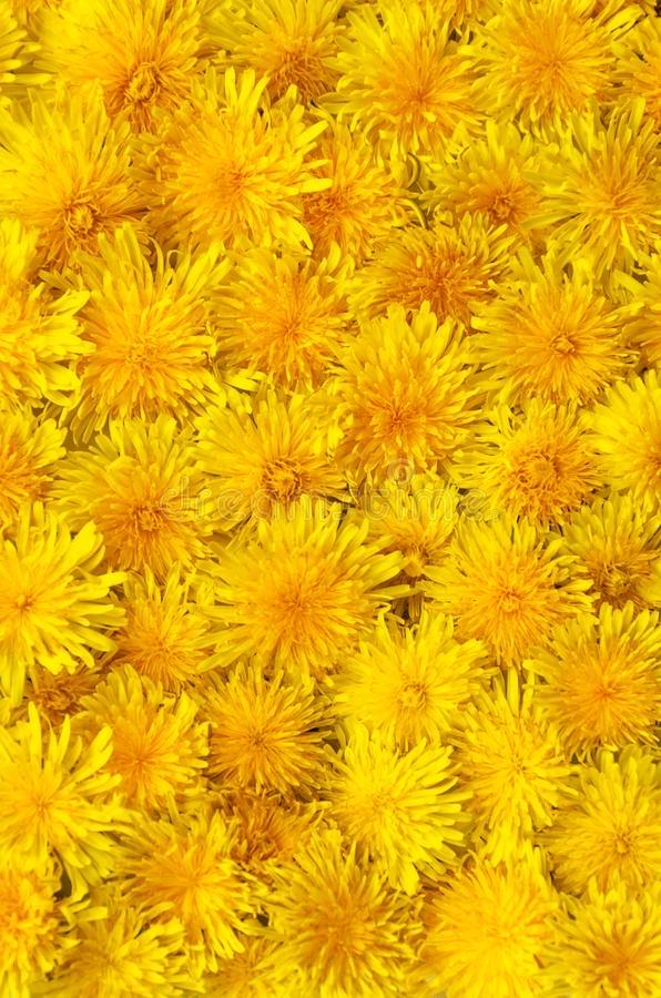 Dandelion honey 200ml jar