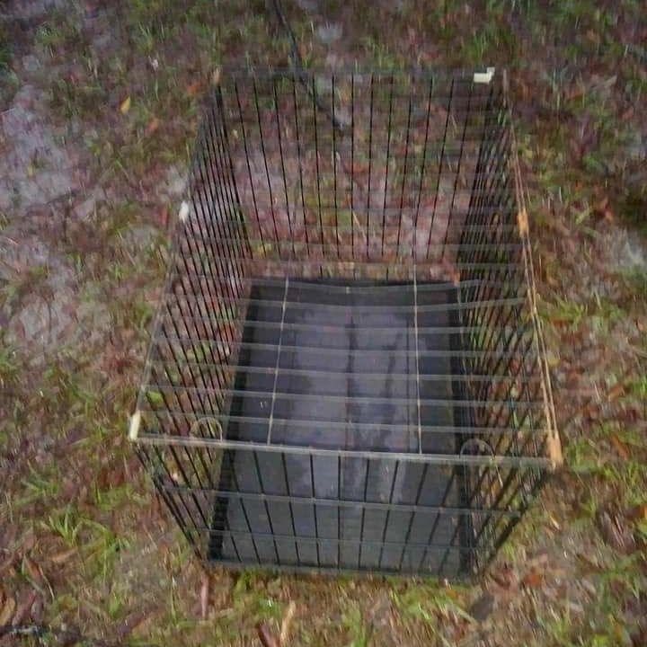 Used small dog cage