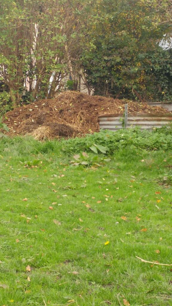 Rotten horse manure
