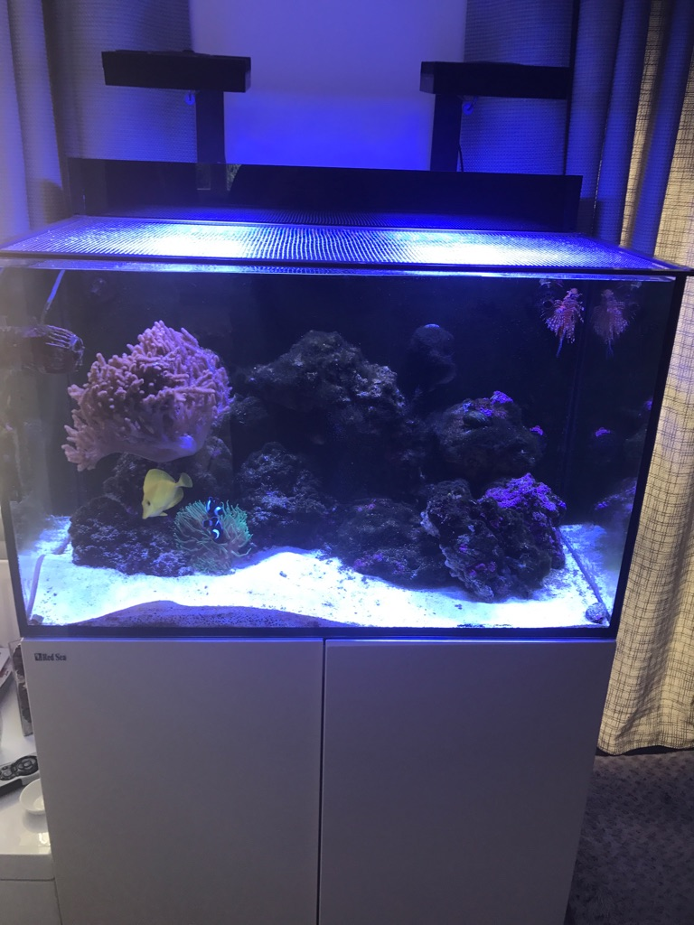 RED SEA MAX E260 REEF-SPEC MARINE TANK