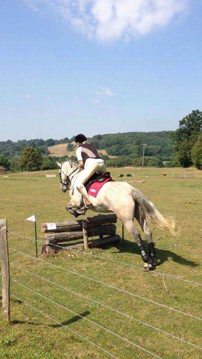 Horse/ pony schooling , sales livery , buying / selling