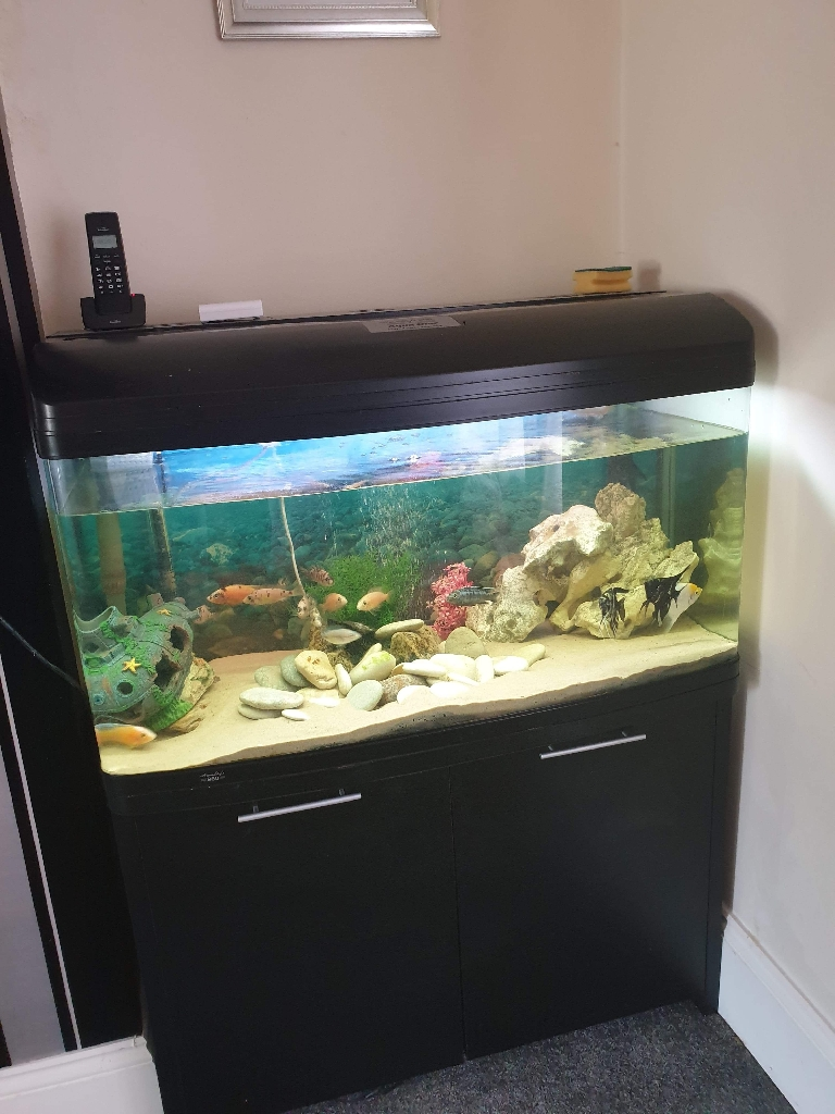 210 litre fish tank with fish and everything inside included