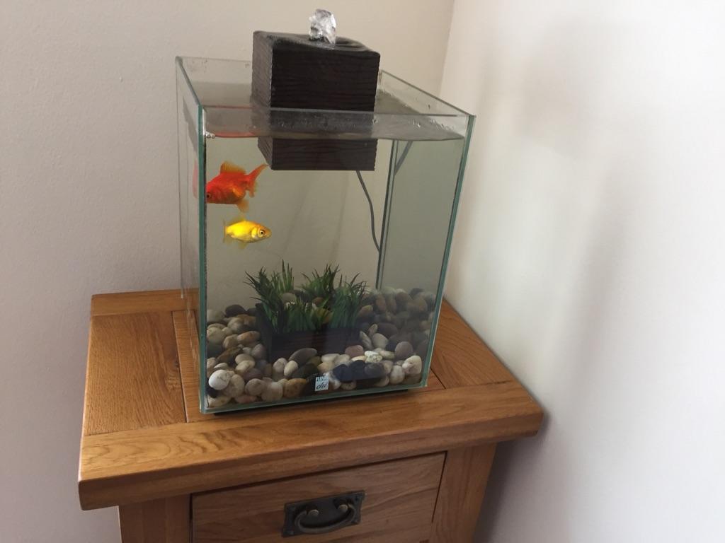 Fluval chi fish tank