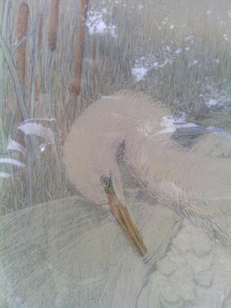 White Crane Picture