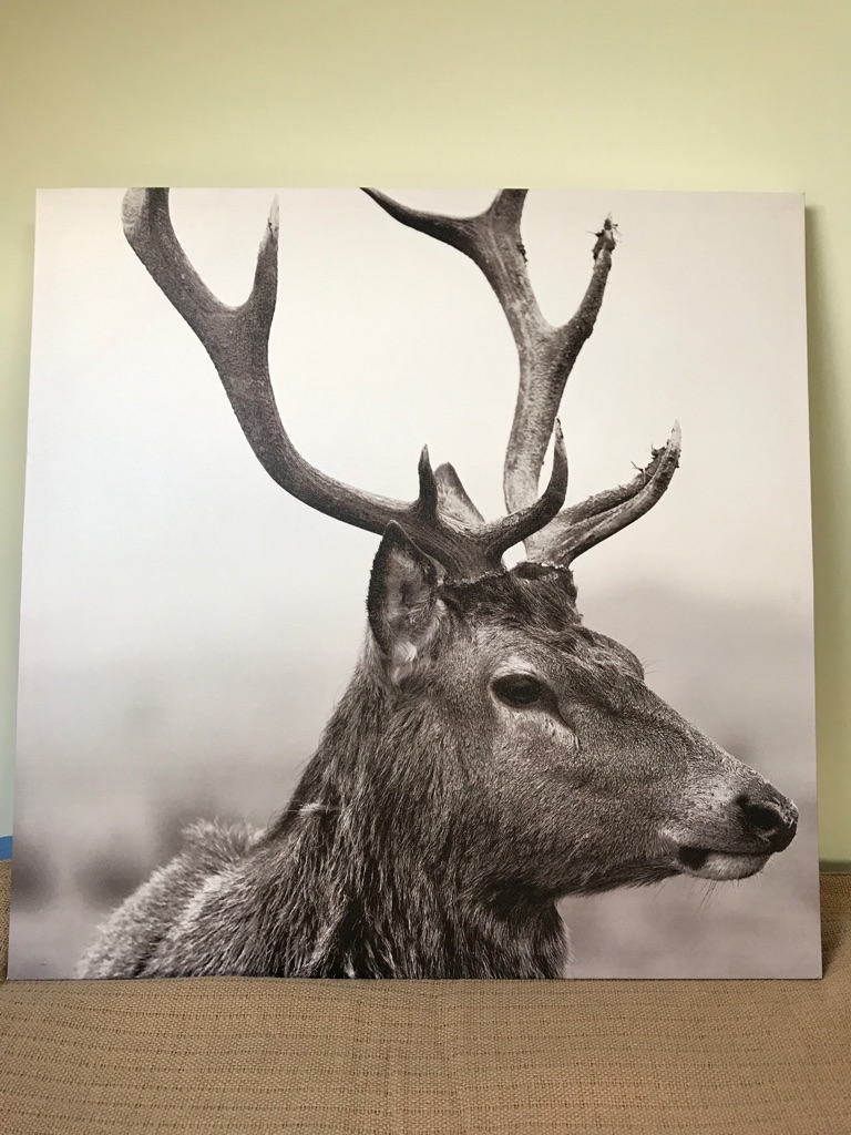 Stag canvas picture