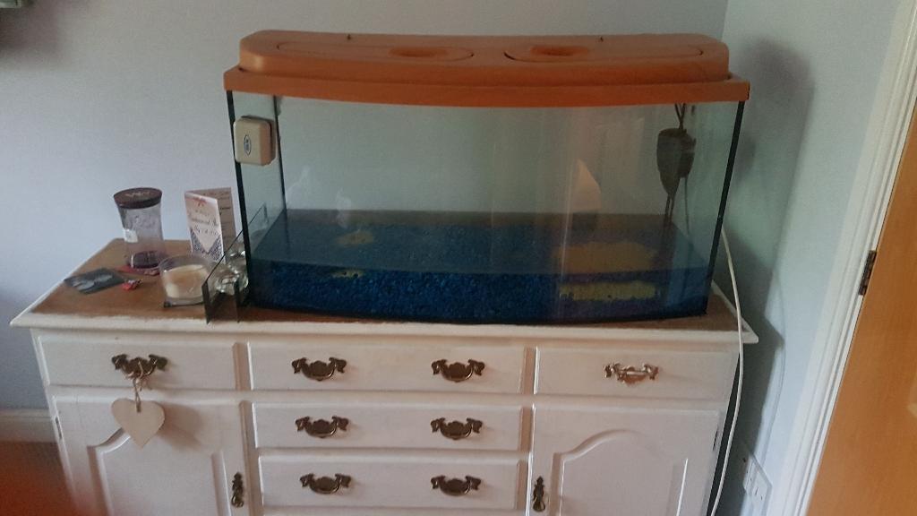 100litre fish tank