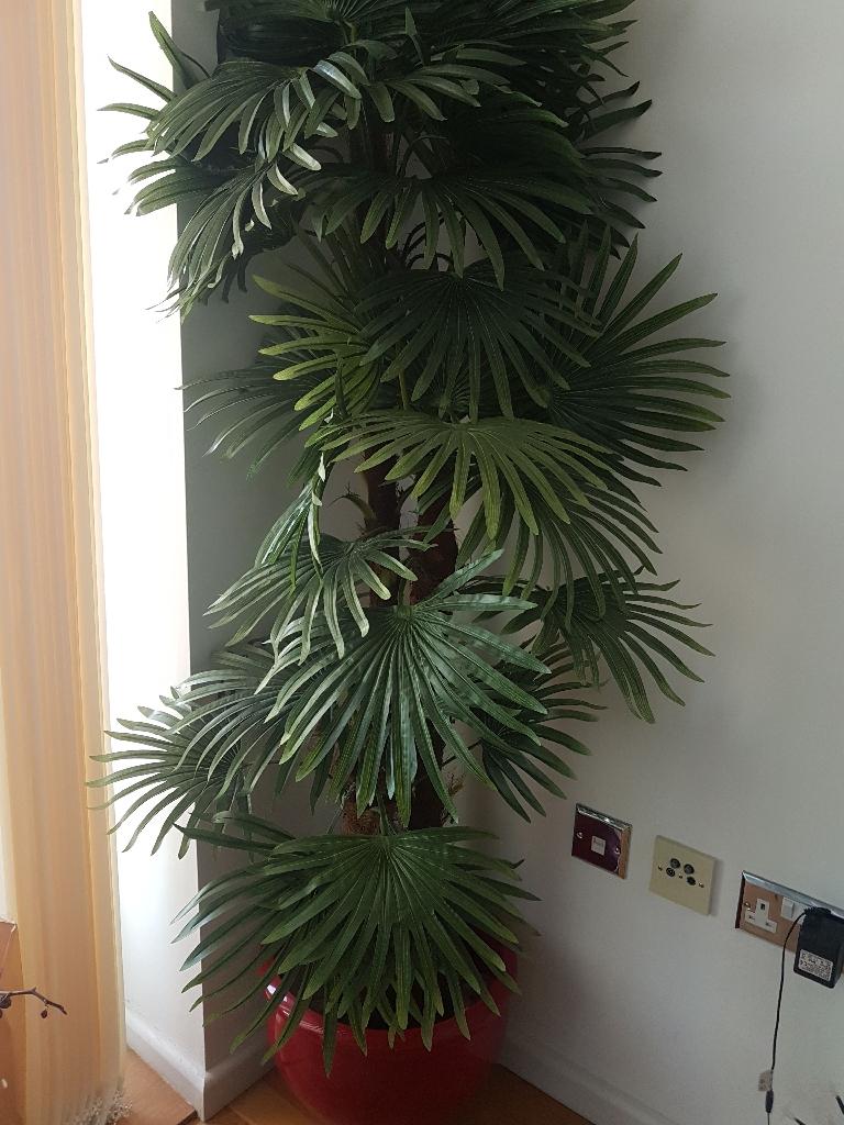 CLOSER2NATURE FINGER PALM TREE -1