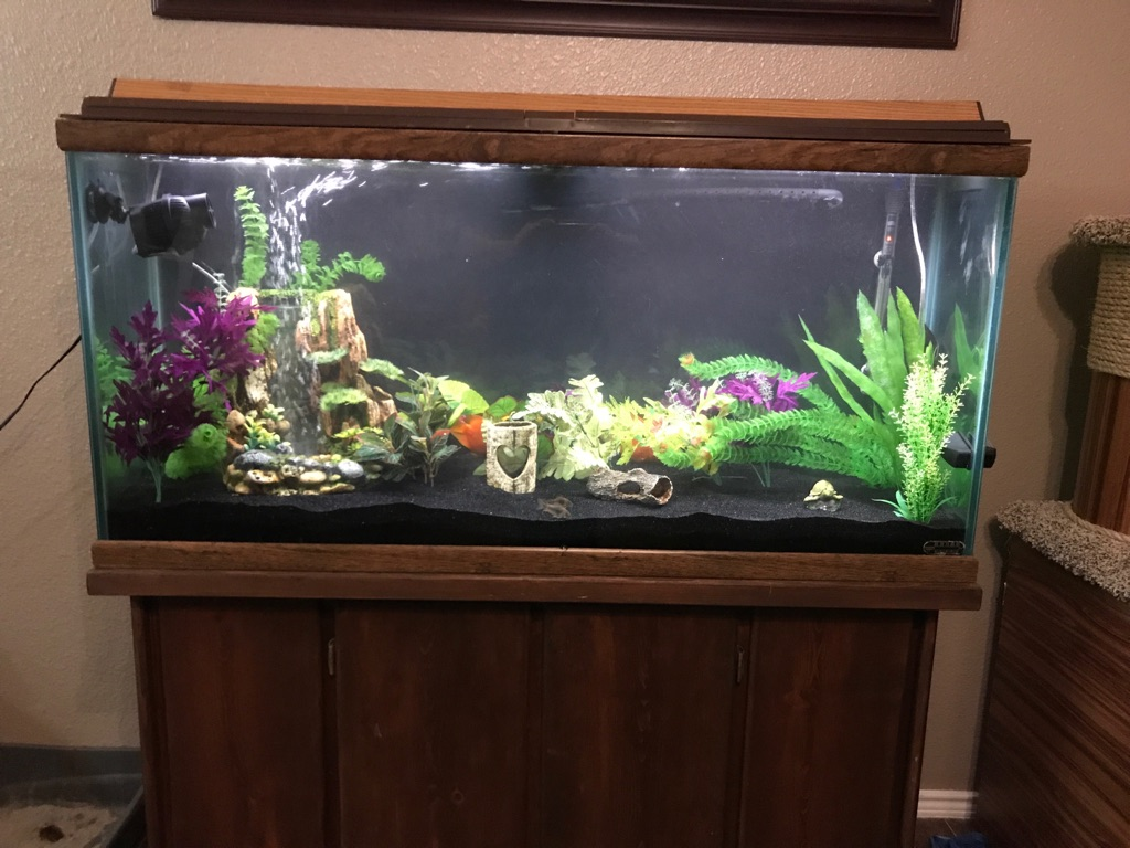 Wooden framed fish tank with stand