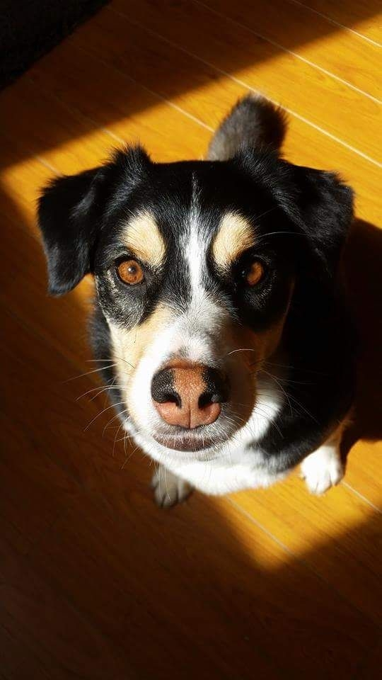 Insured Dog Sitter