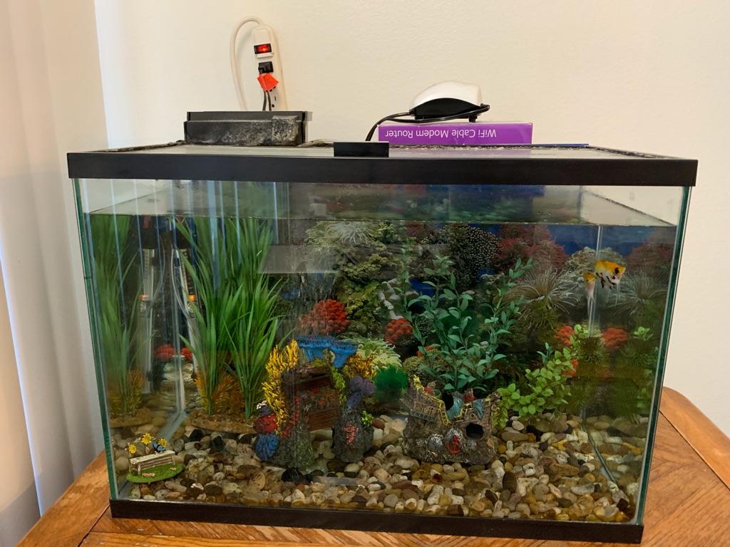 Fisk tank