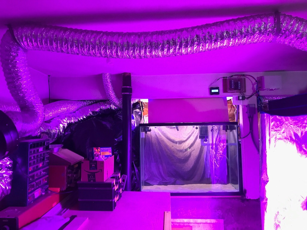 Custom Automated Aquaponic System