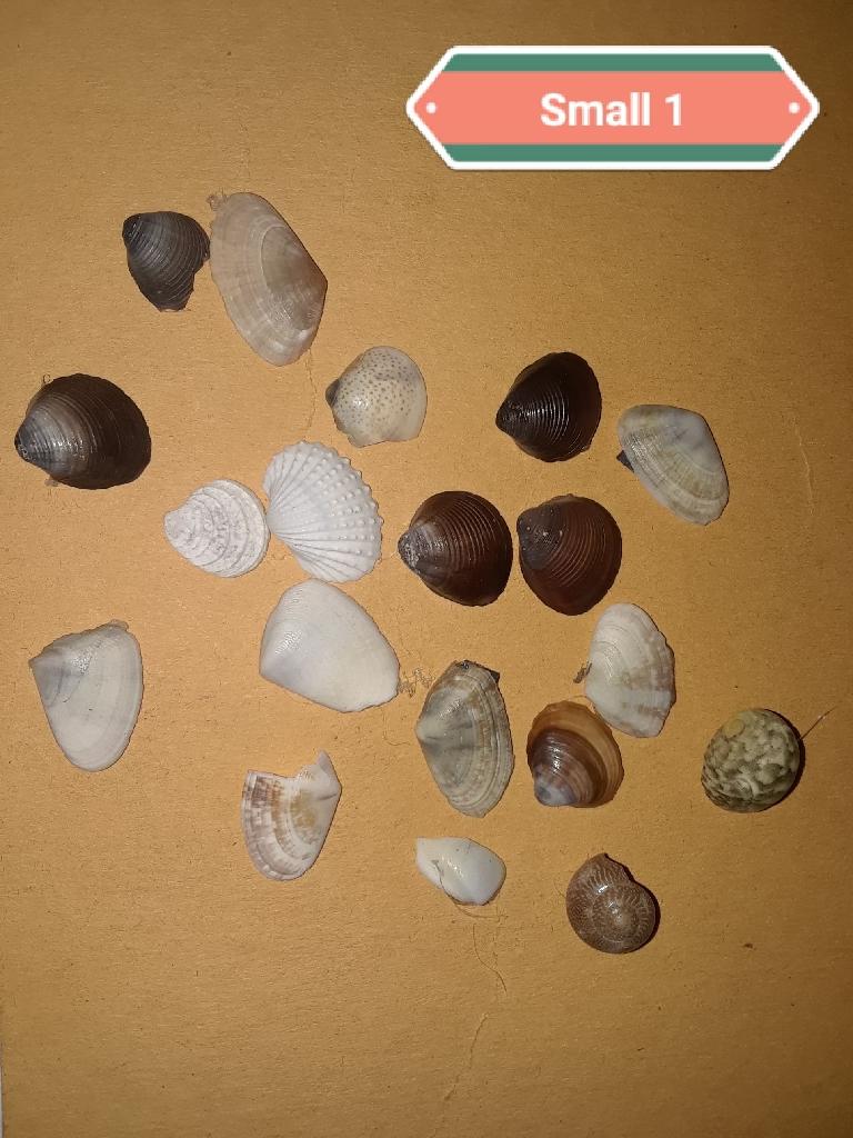 Handmade Small Seashell Magnets
