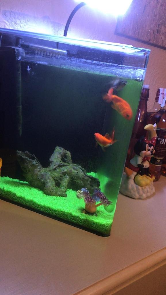 Aquarium+ fish + food !