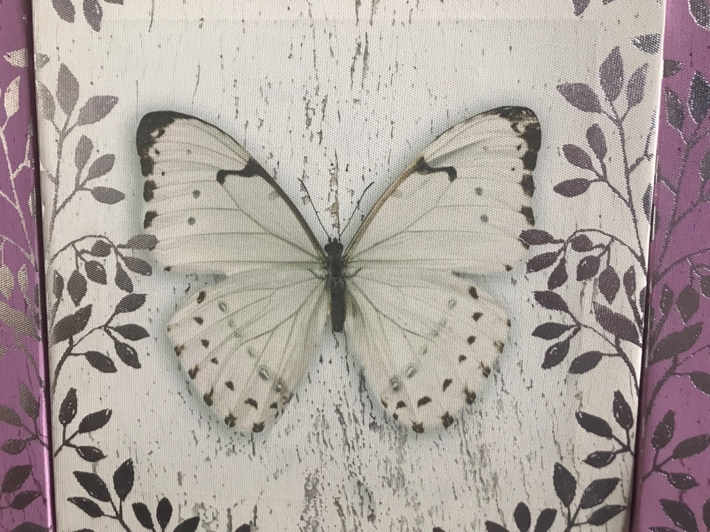 Butterfly Canvases