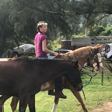 Horse work