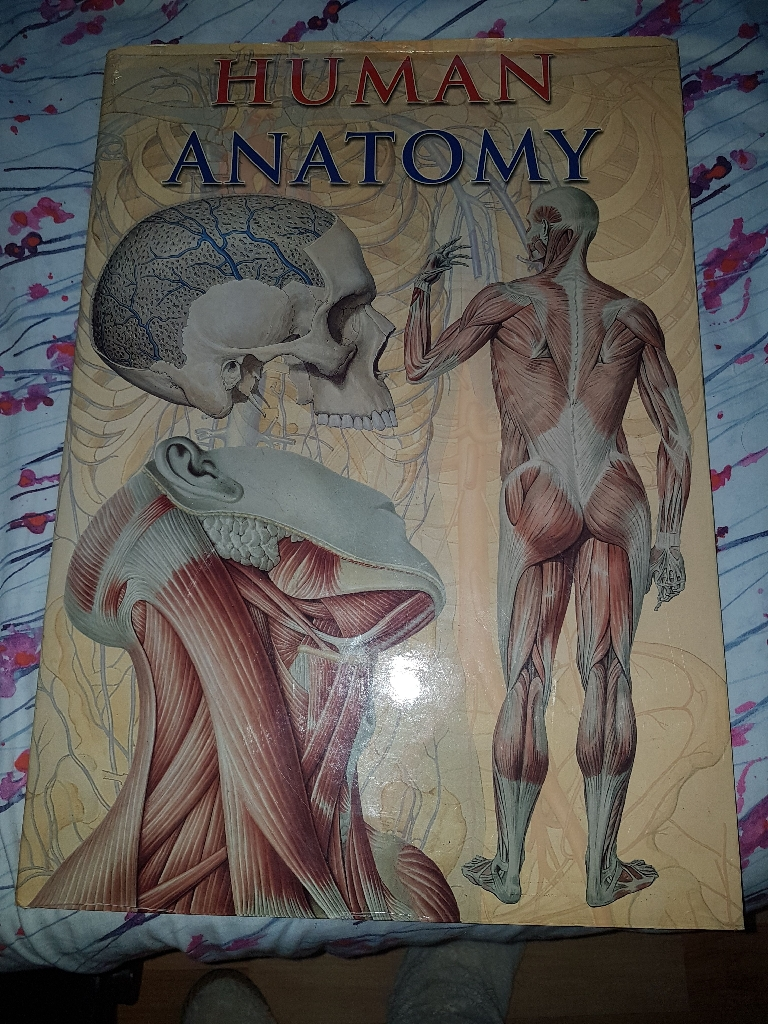 Human Anatomy Book. Large. By Taj Big Books.