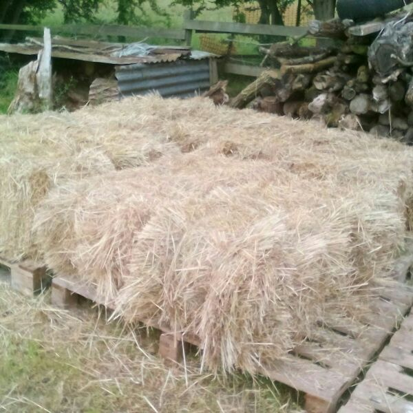 Small hay bales for sale