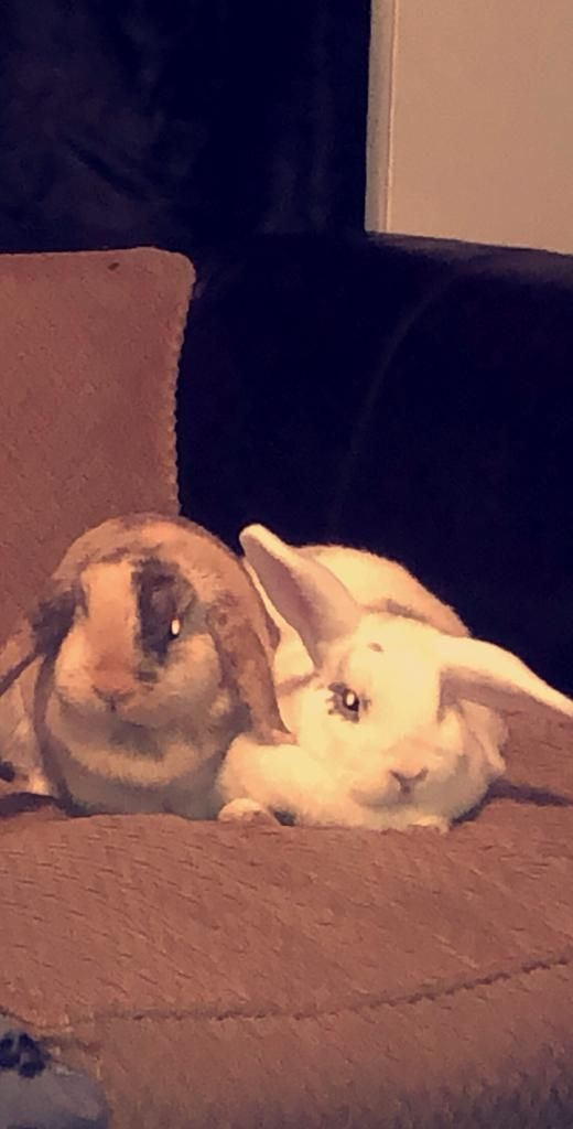 2 x Female Rabbits