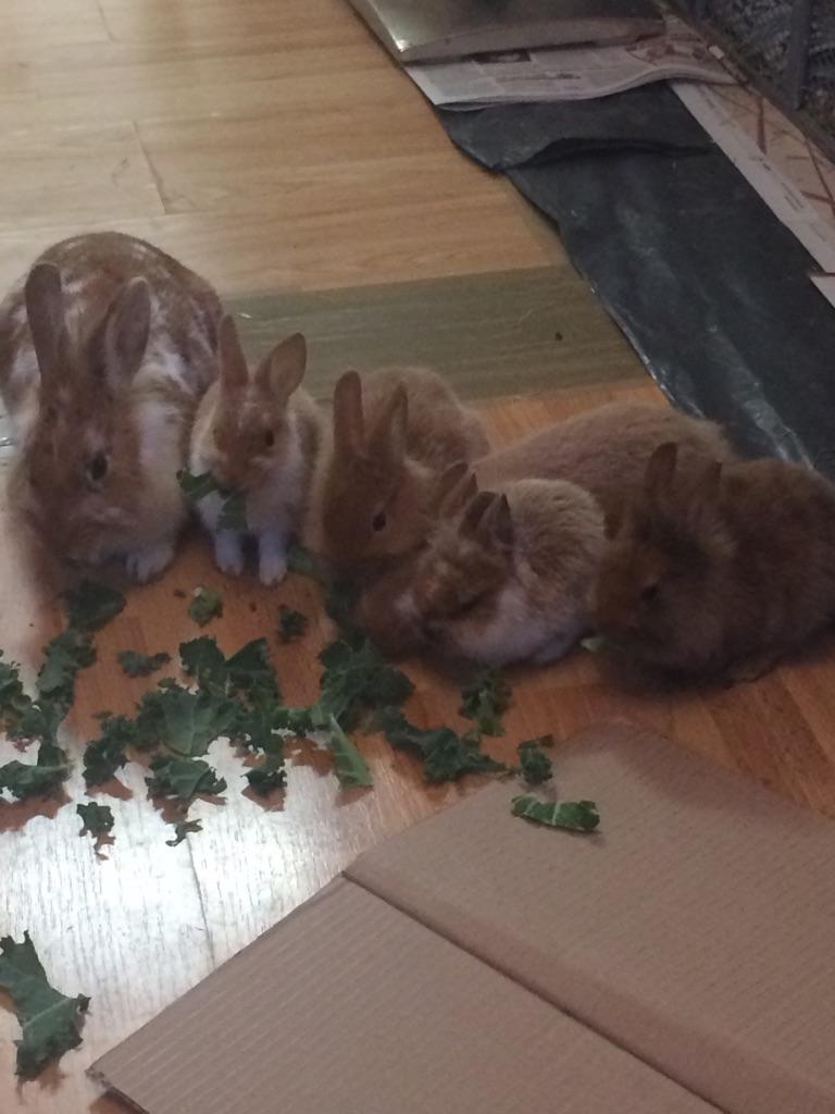 4 baby rabbits 🐇