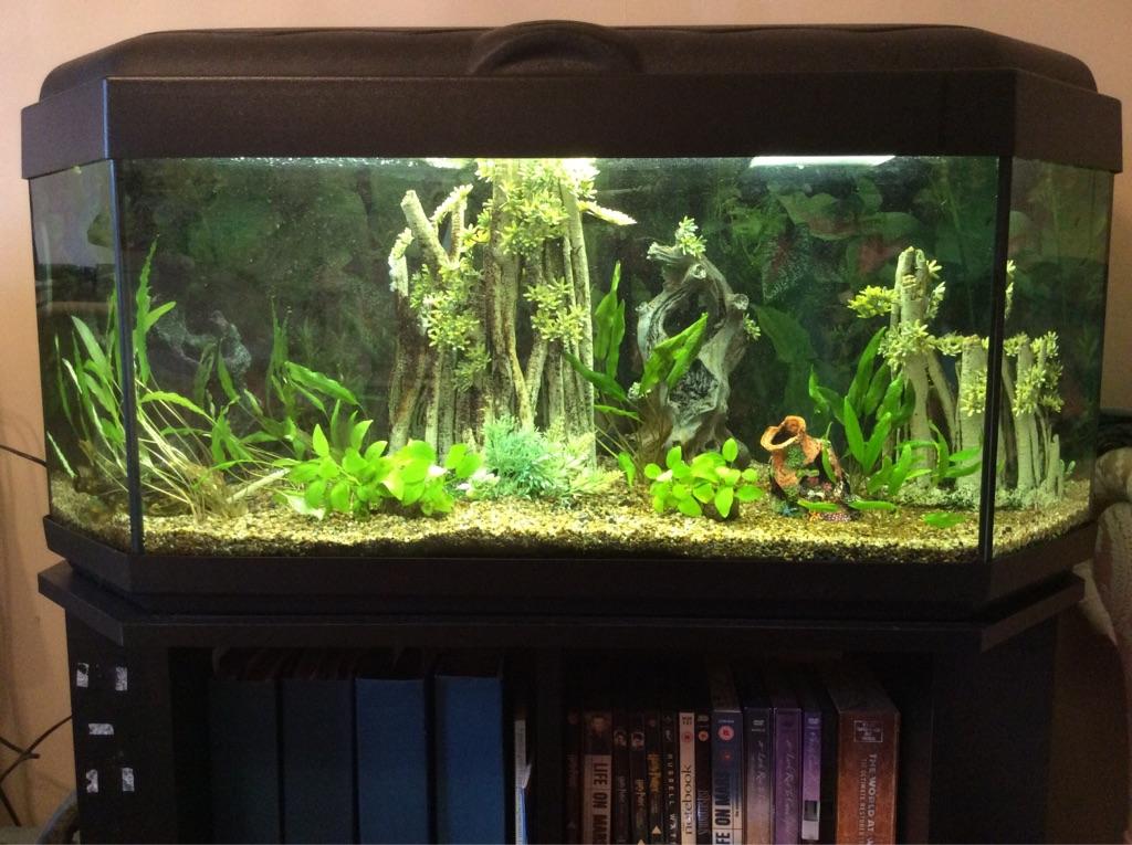 6 sided aquarium