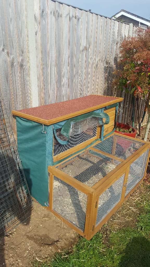 Guinea pig hutch with cover, indoor/outdoor run, food bowls, sawdust, straw and guinea pig food