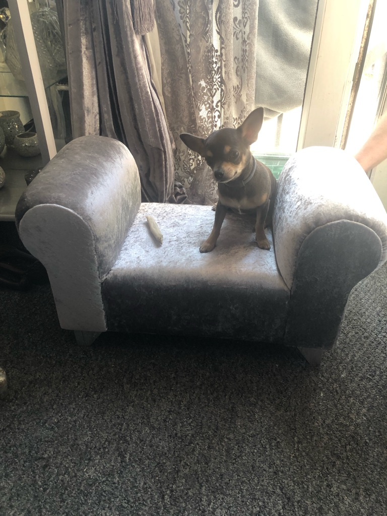 Stunning crushed velvet pet chaise lounge