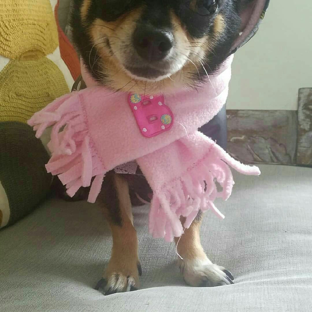 Retro doggy Raincoat