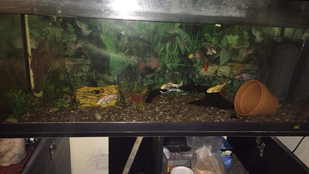 Fish tank and cabinet stand