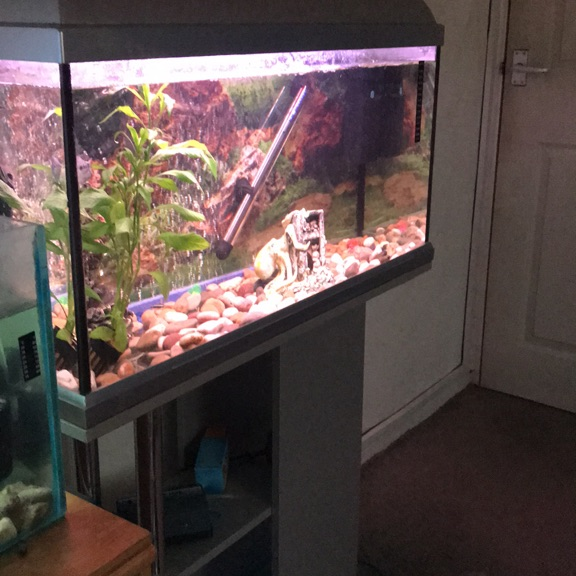 Tank and stand and fish