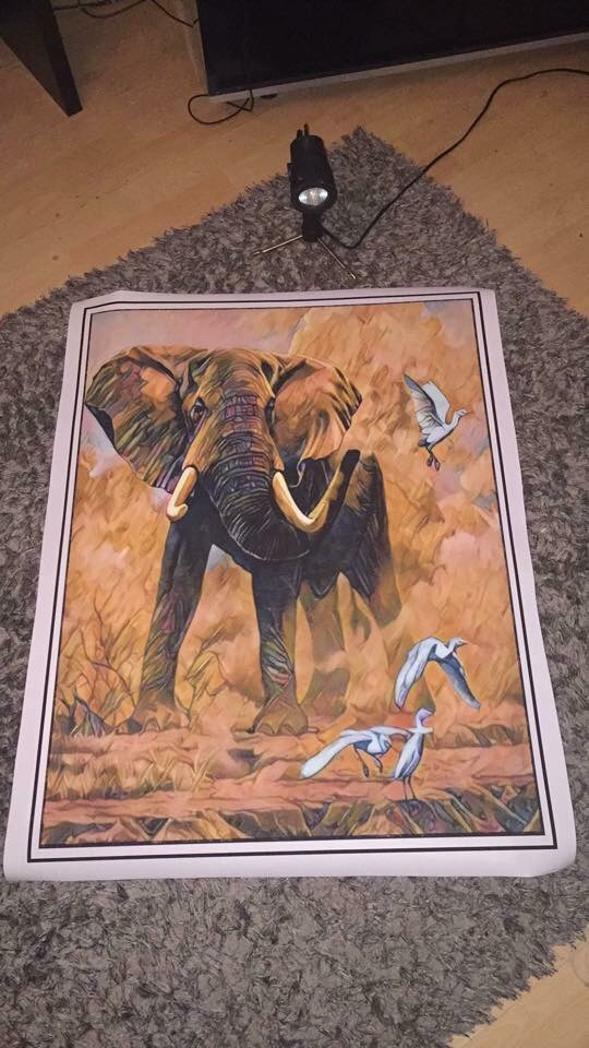 African Elephant Canvas print wall hanging for your wall space ready to display (new)
