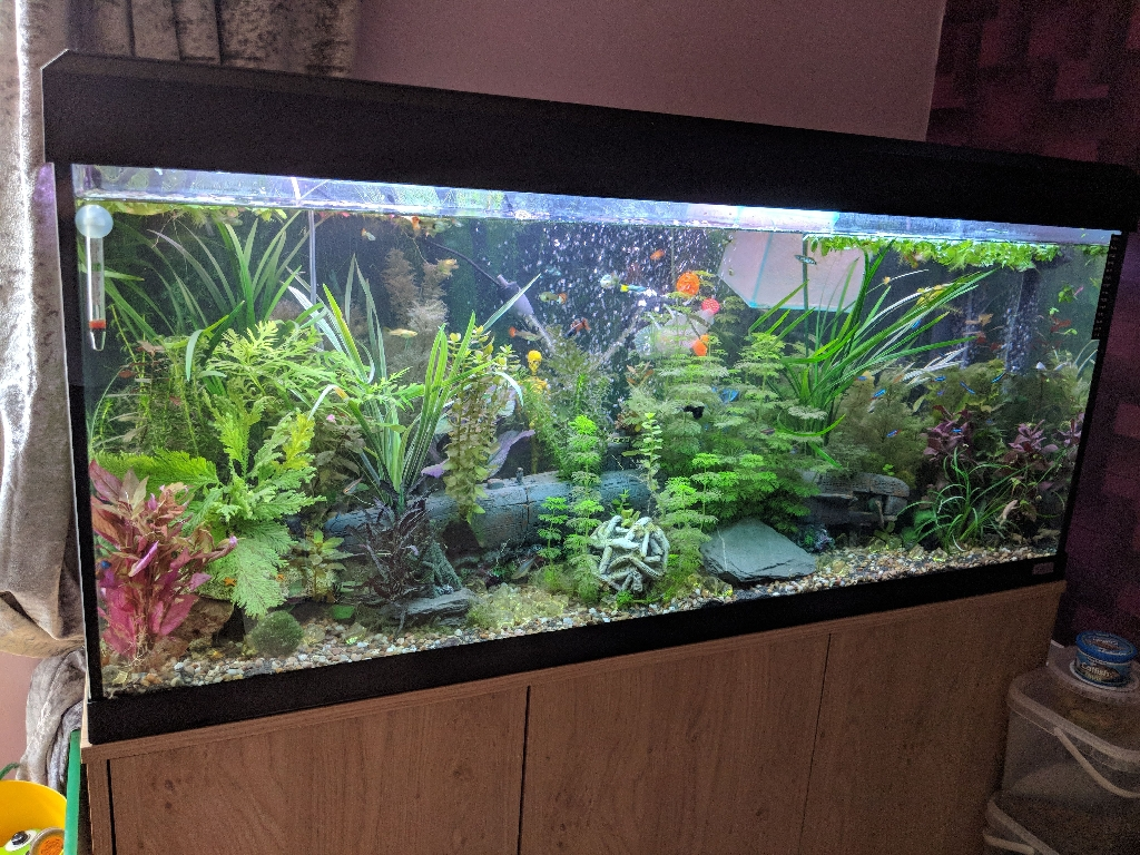 Tropical fish and plants