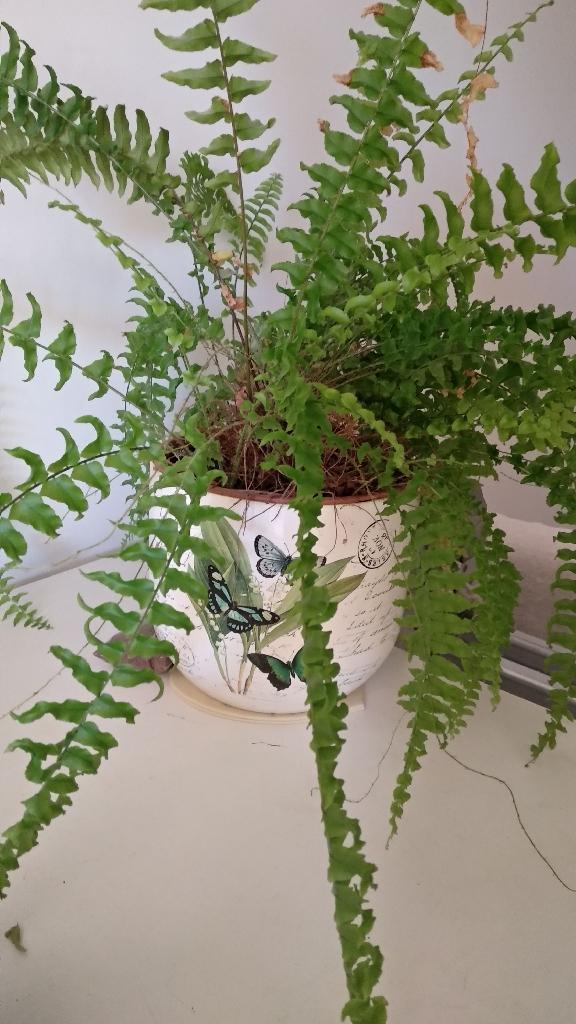 Nice plant&nice pot available till sun 18/11