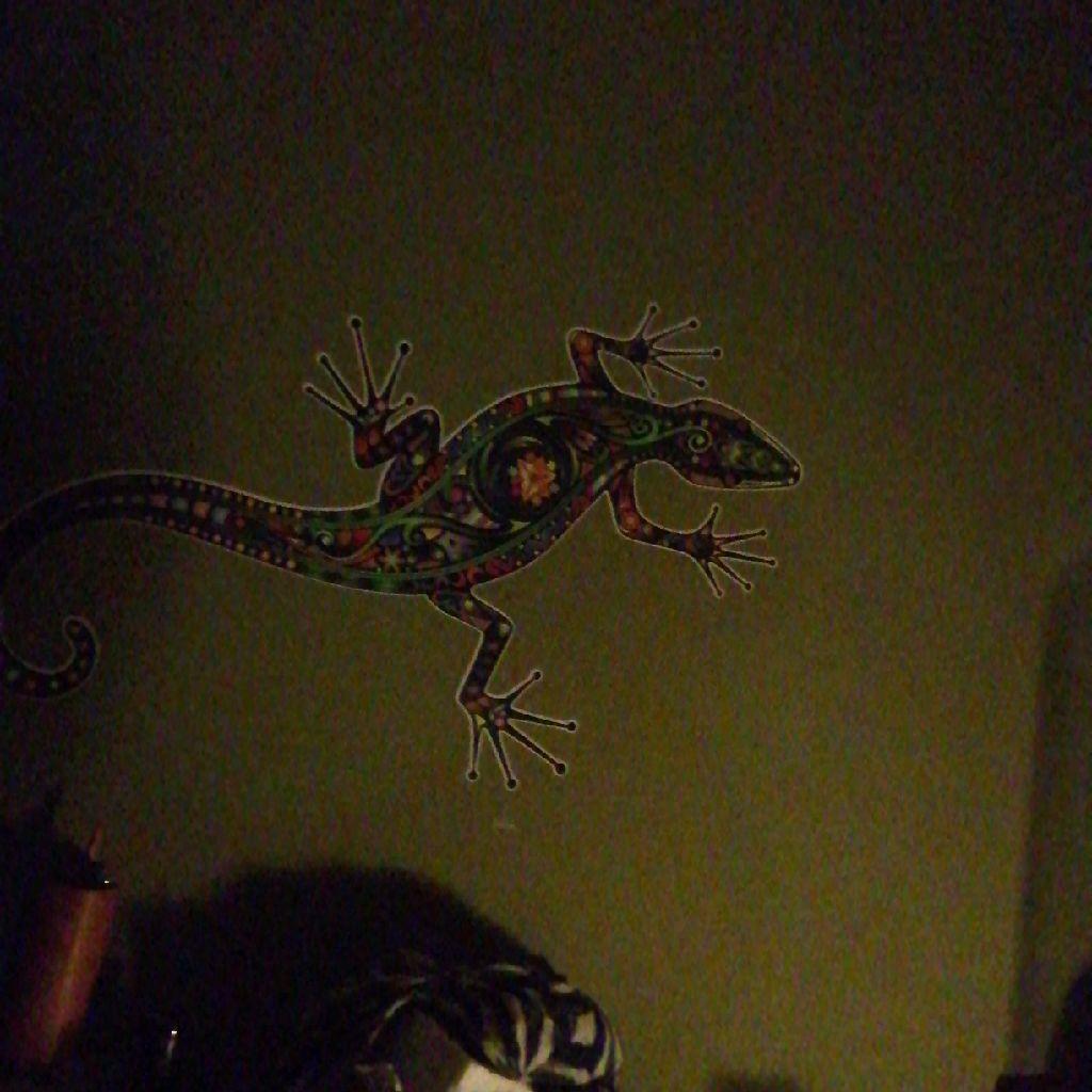 Gecko G.