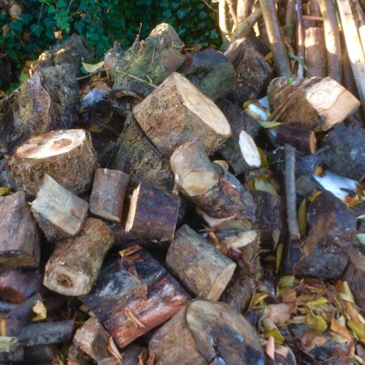 Seasoned firewood cut and ready for splitting