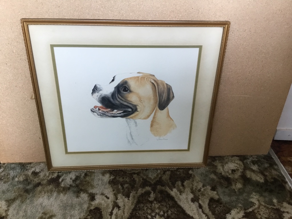 Watercolour of a bull mastiff dog signed 18in 20in