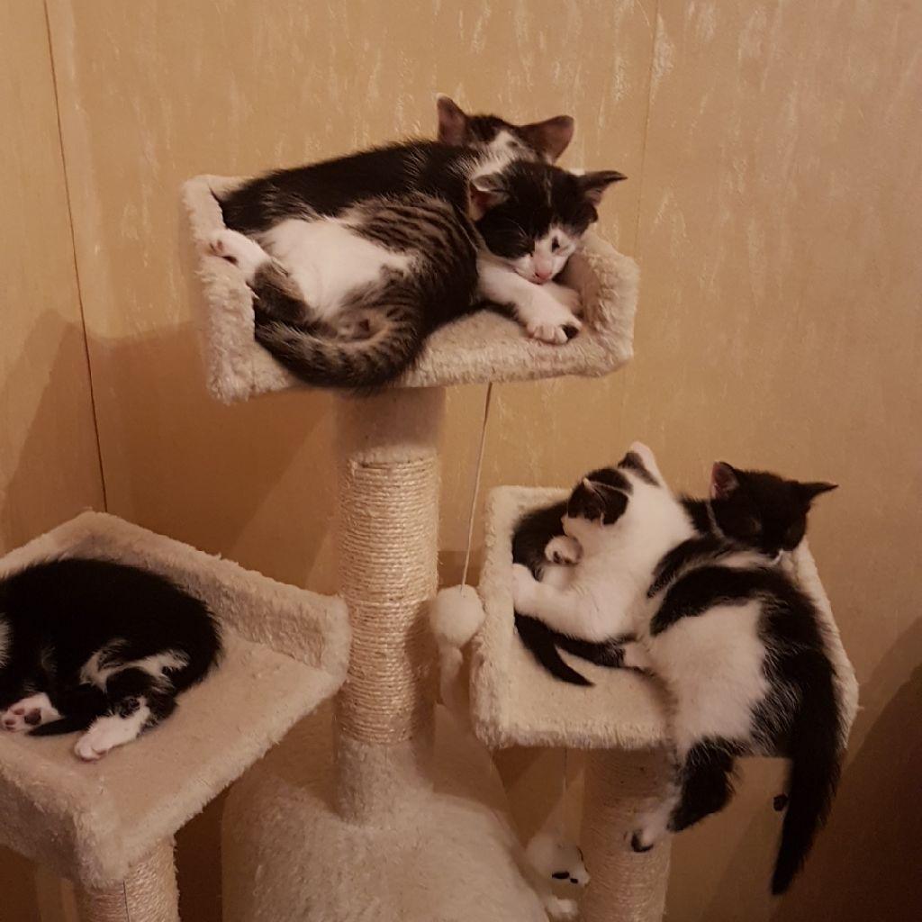 5 georgeus kitten