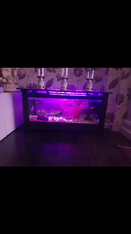 Coffee Table Fish Tank For Sale