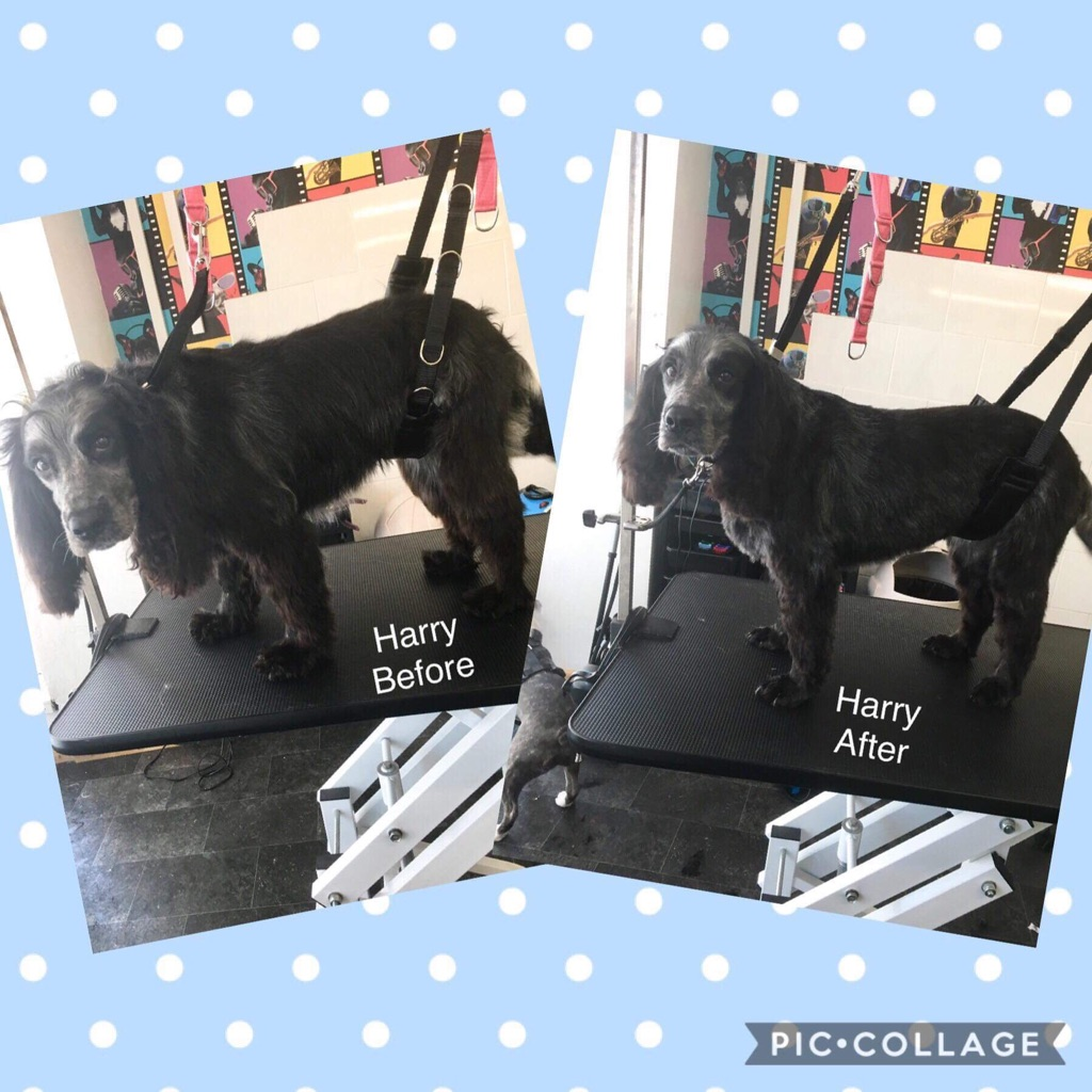 Fully qualified Dog walker, pet taxi, Dog groomer