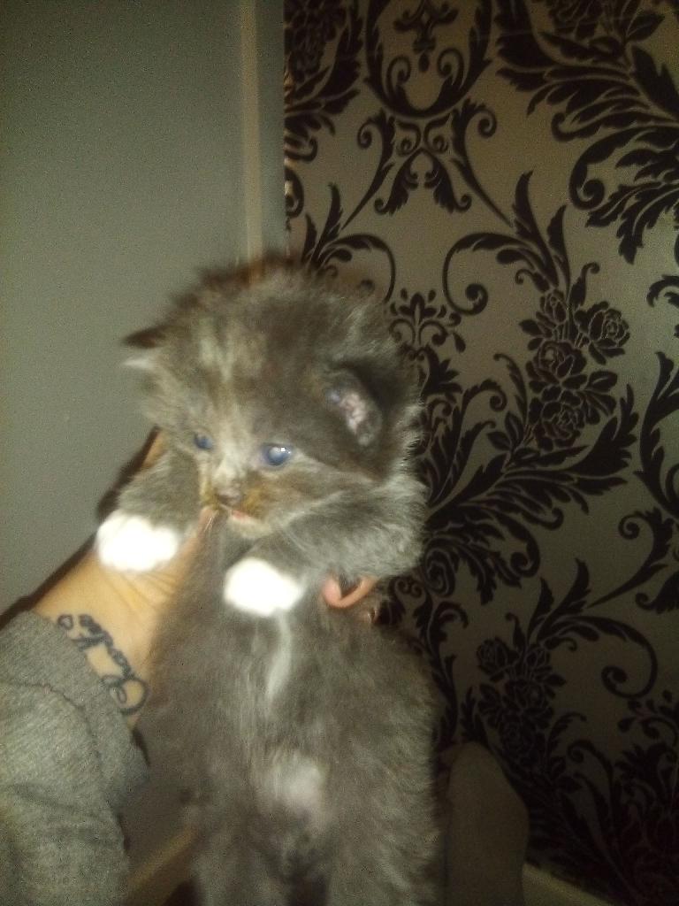 Chunky kittens