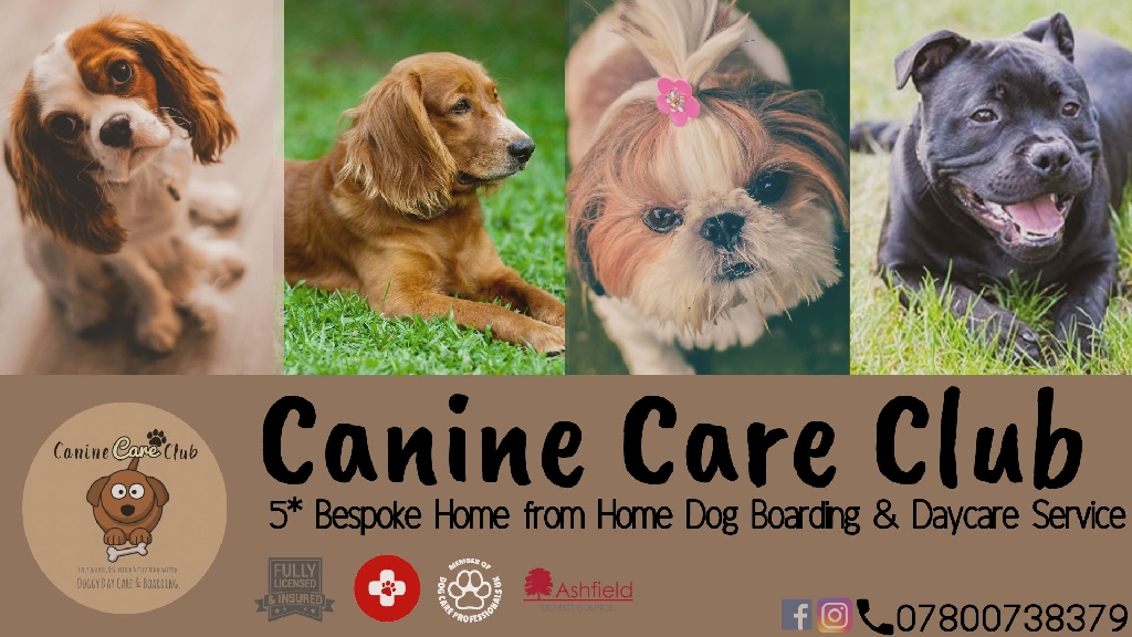 Canine Care Club Home from Home Dog Boarding & Daycare