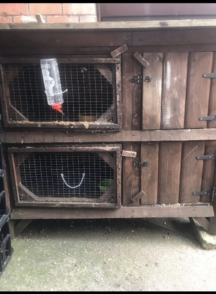 Rabbit/ animal hutch