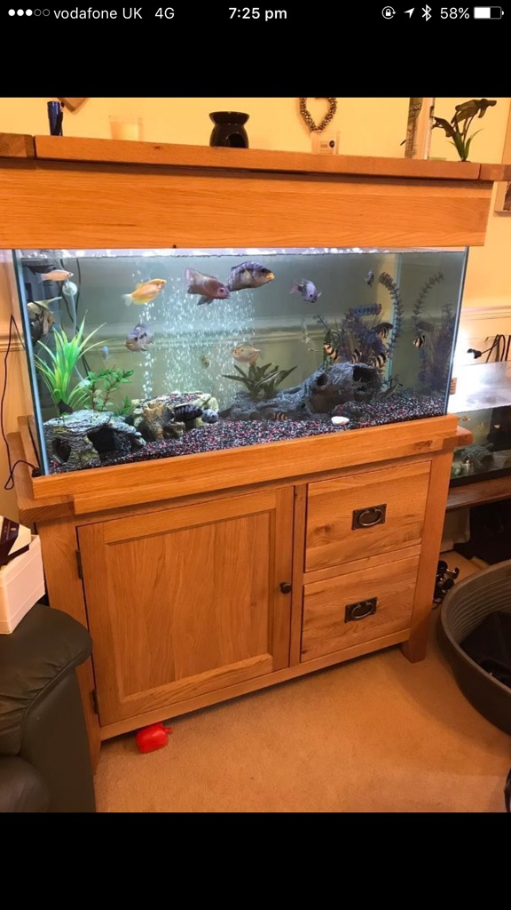200L tank+cabinet+chemicals+fish+accessories