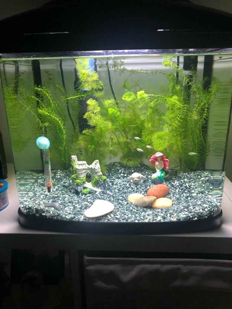 50l fish tank - £50 ono