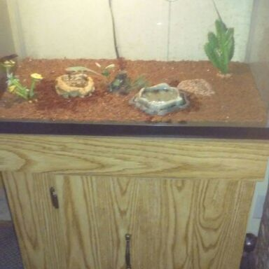 20 gallon tank with stand